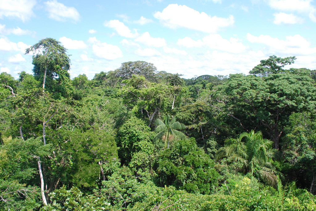 rainforestscp.jpg